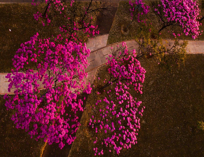 Pink-Trees-landing-page