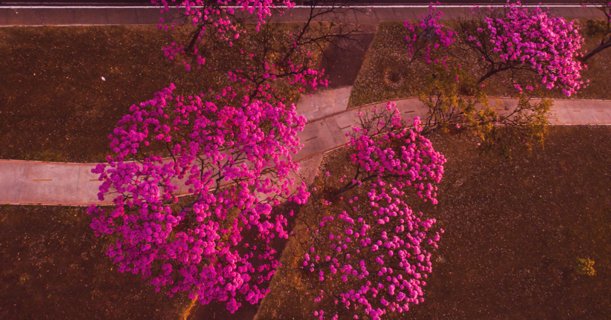 pink trees-2